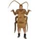 Cafard - Insecte